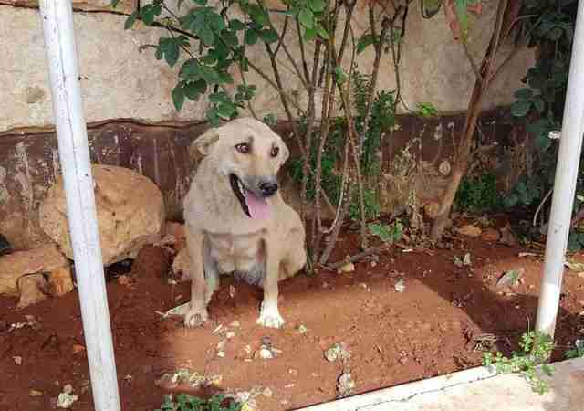 Stray dog sitting in dirt