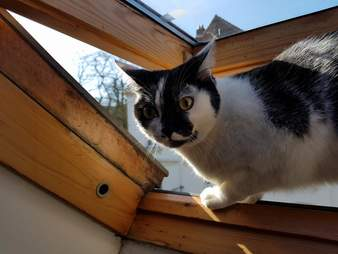 cat loves playing on the roof and plays hide and seek to come back inside