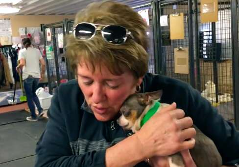 chihuahua puppy mill