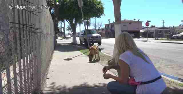 blind dog lived on streets for 10 years