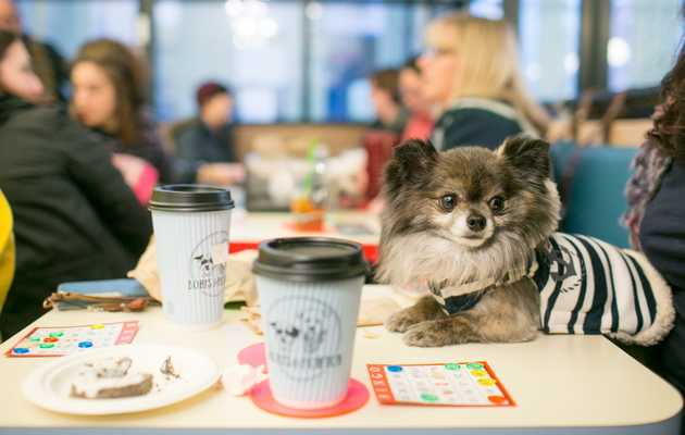Where to Eat and Drink With Your Human (When You're a Dog)