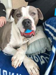 Shelter dog holding toy in his mouth