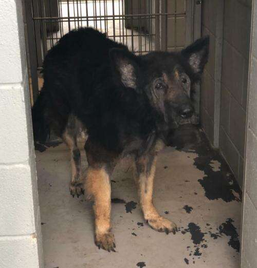 family leaves dog at shelter for being too old