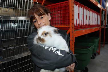 matted rabbit rescue belgium