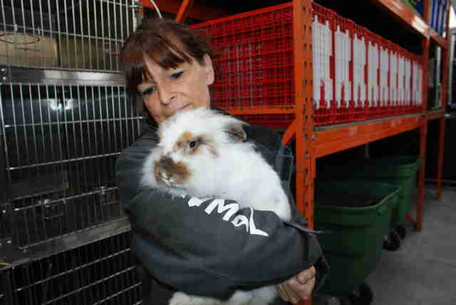 matted rabbit rescue belgium