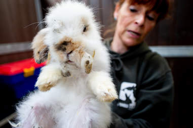 matted rabbits