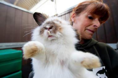rabbit matted overgrown teeth