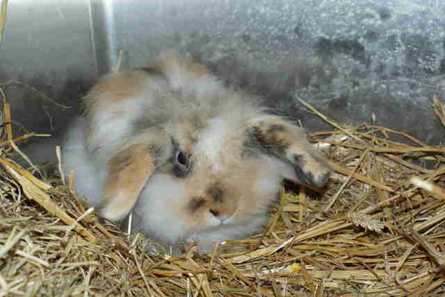 rabbit matted rescue