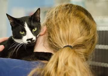 Cat hugging woman around her neck