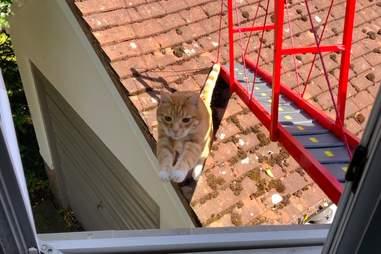 Reggie the cat ignores his bridge