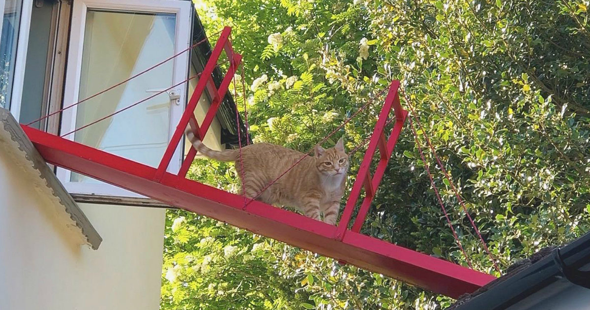 Guy Builds A Special Bridge To Keep Cat From Falling Off The Roof