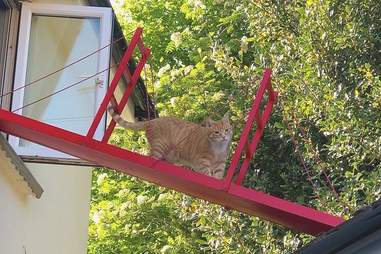 Reggie the cat walks on his special bridge