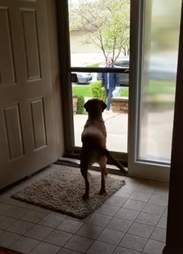 dog jumps for joy when her brothers come to visit