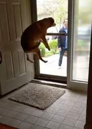 dog jumps for joy every time she sees her brothers