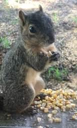 squirrel friend texas