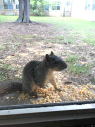 squirrel texas friend