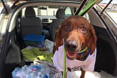 Jake on his road trip home