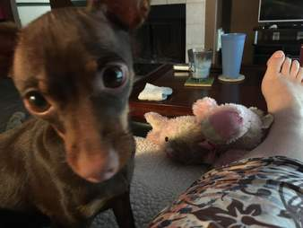 dog brings her mom her special toy whenever she's sick