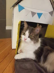 woman builds a playhouse for her rescue cat