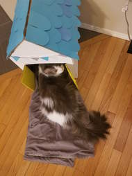 woman makes a special playhouse for her rescue cat