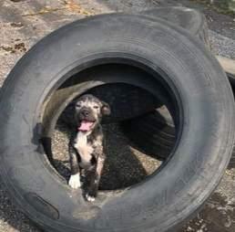 puppy mange tire tennessee