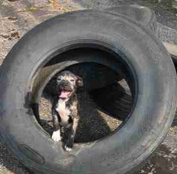 Puppy Living In Tire Couldn't Stop Smiling At People Who Saved Her