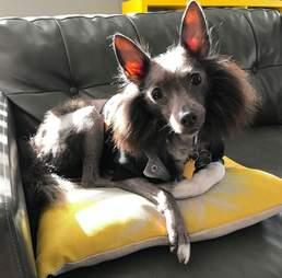 unusual looking rescue dog