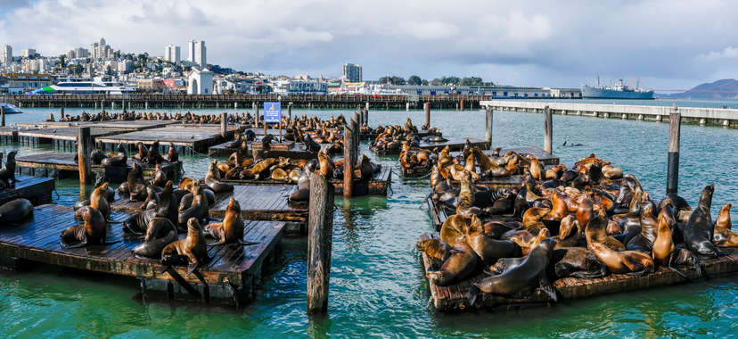 Free Cheap Sf >> Actually Cool Things To Do In San Francisco Right Now