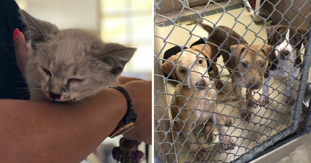 200 Dogs And Cats Were Just Abandoned At This Shelter In A Single Weekend