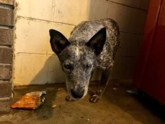 abandoned dog alabama rest stop