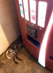 dog abandoned alabama rest stop