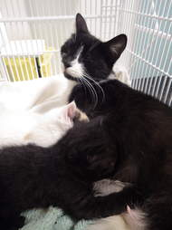 cat and kittens abandoned in garbage bag