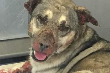Rambo in the California animal shelter