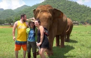 elephant thailand friend lullaby