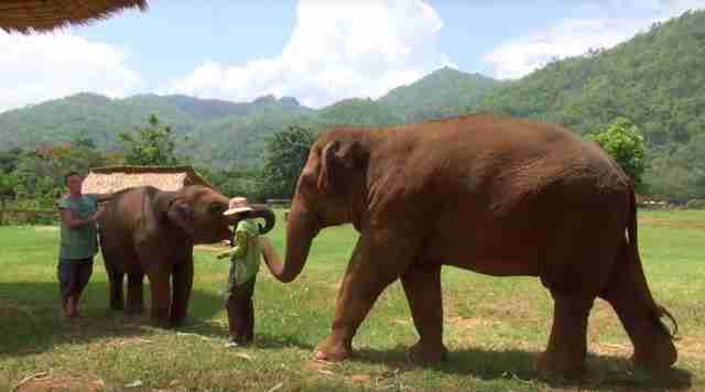 elephant thailand lullaby friend