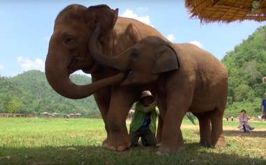 elephant friend lullaby thailand