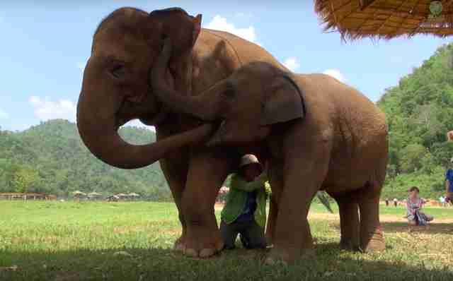 elephant friend lullaby thailand