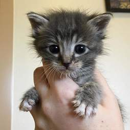 Person holding tiny kitten in her hand