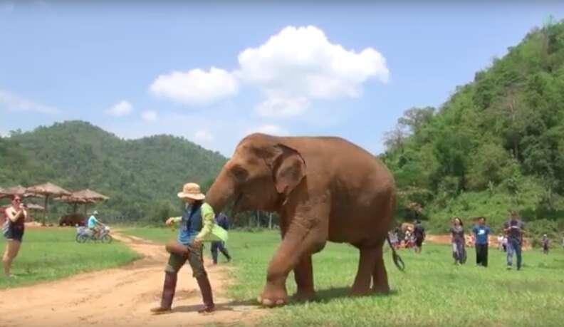elephant thailand lullaby friend