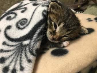 Tiny kitten sleeping on blanket