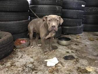 Abandoned dog in old tire shop