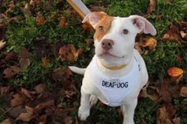 deaf puppy dumped at shelter