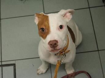 deaf puppy dumped shelter