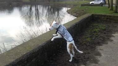 deaf puppy dumped RSPCA