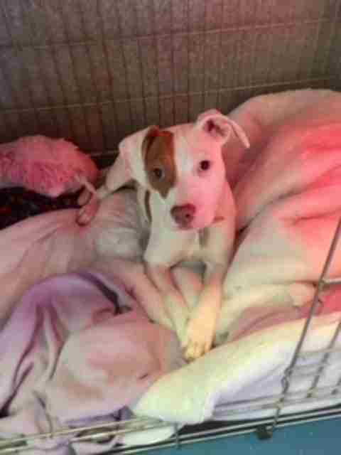deaf dog dumped shelter