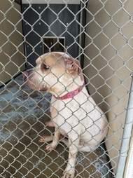 Shelter dog in kennel
