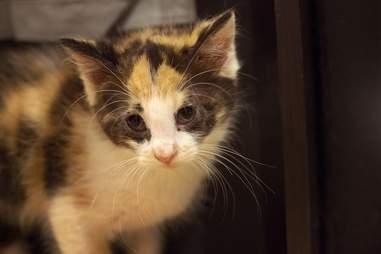 kitten lancaster abandoned box