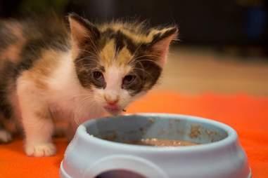 kitten abandoned box pennsylvania