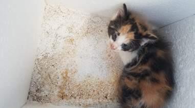 kitten locked box pennsylvania
