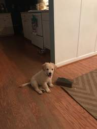 puppy falls in love with a brick